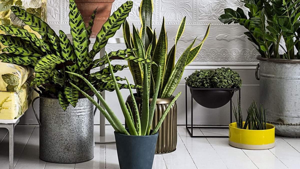 Як вписати живі рослини в інтер'єр квартири: кращі ідеї
