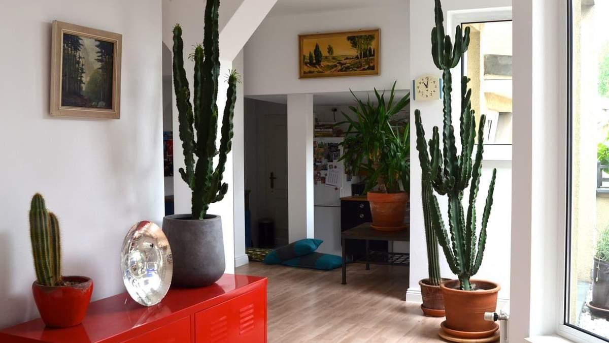 Найкрасивіші кактуси, які приживуться у будь-якому домі