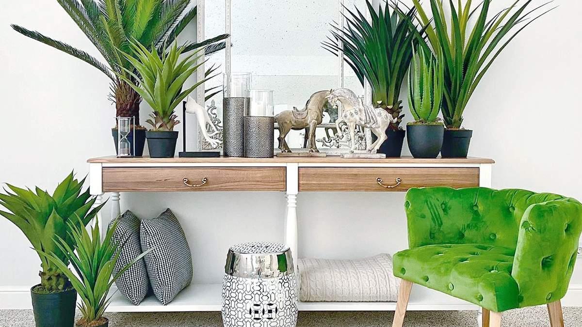 4 ідеальних рослини для кухні: назви, особливості та фото