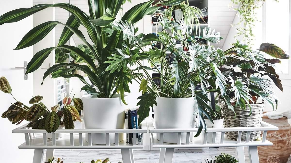 Зеленые растения в интерьере: 5 цветков, которые подойдут новичкам