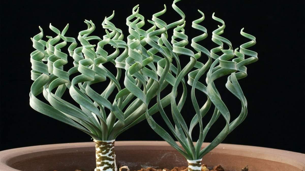Необычные комнатные растения, которые поднимут настроение: ТОП-3 - фото