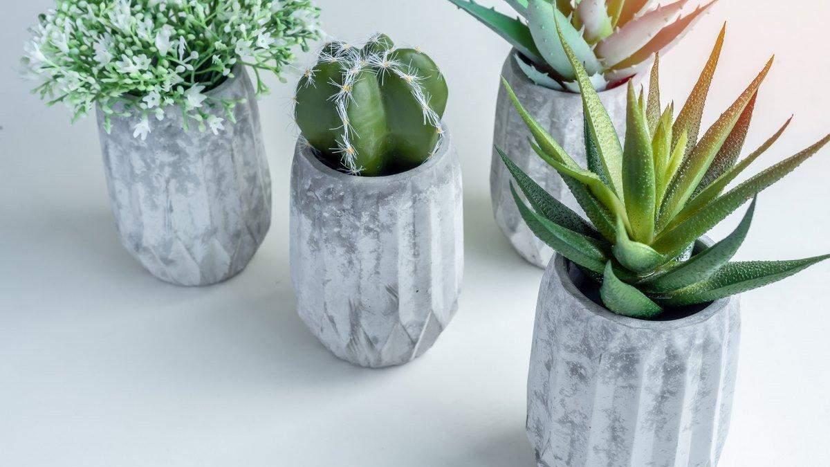 Какие растения украсят рабочий стол: 5 идей для дома и офиса