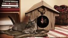 Как делать ремонт, если у вас домашние животные: 3 нюанса