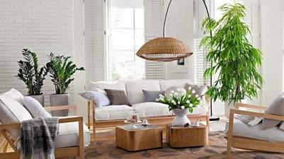 Небезпечні живі рослини: від яких кімнатних квітів краще відмовитися та чому