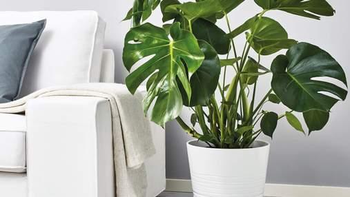 Какие цветы нельзя держать дома: 5 опасных растений