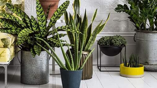 Как вписать живые растения в интерьер квартиры: лучшие идеи