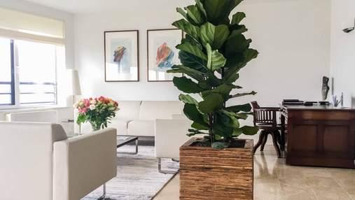 ТОП-3 самых лучших живых растения для дома – фото