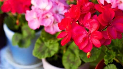 Растения для квартиры с неповторимым ароматом: 3 идеи с фото
