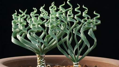 Необычные комнатные растения, которые поднимут настроение: ТОП-3