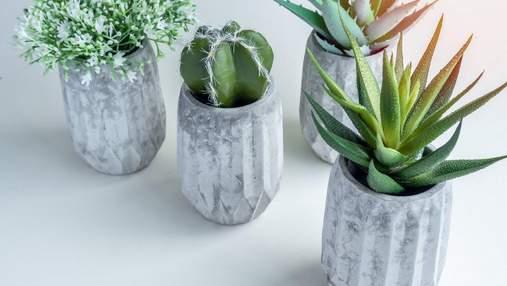 Які рослини прикрасять робочий стіл: 5 ідей для дому та офісу