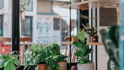 Найкращі рослини для дому за версією Google:  поради найвідомішої пошукової системи у світі